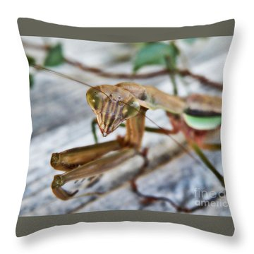 Bug Eyed  Throw Pillow by Christy Ricafrente