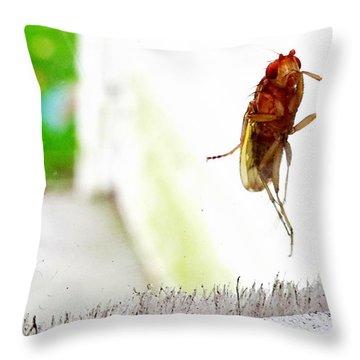 Bug On Window Throw Pillow
