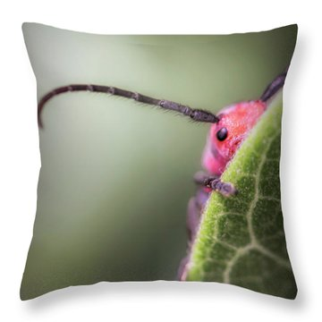 Bug Untitled Throw Pillow