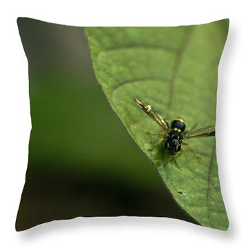 Bugeyed Fly Throw Pillow by Douglas Barnett