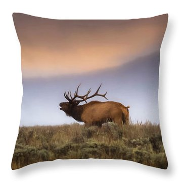 Throw Pillow featuring the photograph Bugle Boy  by Kelly Marquardt
