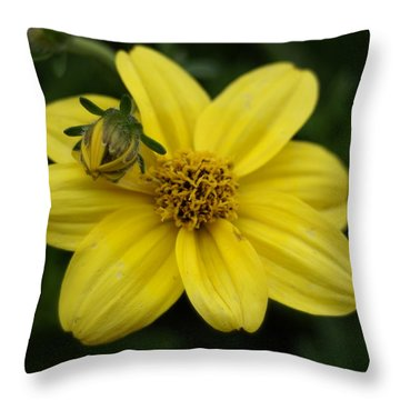 Throw Pillow featuring the photograph Bugs Life by Heidi Poulin