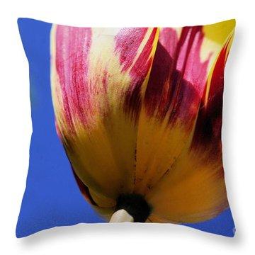 Bugs  Pov  Throw Pillow