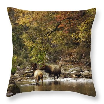 Bull And Cow Elk In Buffalo River Crossing Throw Pillow