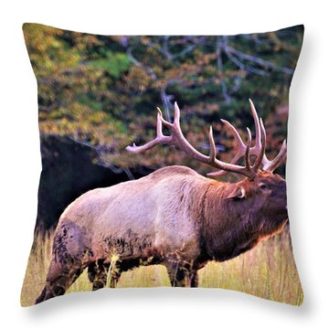 Bull Calling His Herd Throw Pillow