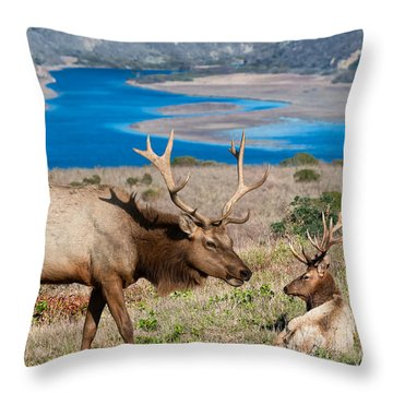 Bull Elk Above Tomales Bay Throw Pillow