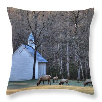 Bull Elk Attending Palmer Chapel  In The Great Smoky Mountains National Park Throw Pillow