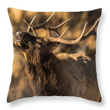Bull Elk Bugle In Fall Throw Pillow
