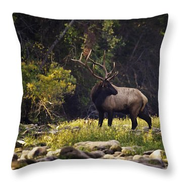 Bull Elk Checking For Competition Throw Pillow
