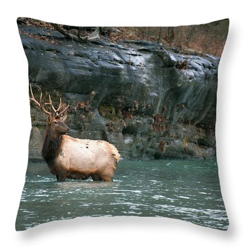 Throw Pillow featuring the photograph Bull Elk Crossing The Buffalo River by Michael Dougherty