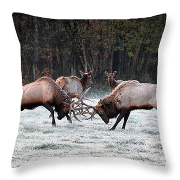 Bull Elk Fighting In Boxley Valley Throw Pillow