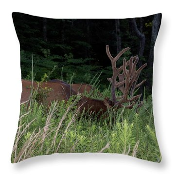 Bull Elk Grazing Throw Pillow