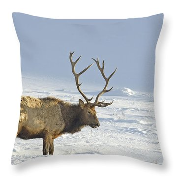 Bull Elk In Snow Throw Pillow