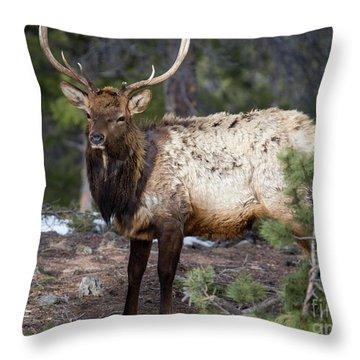 Bull Elk In The Rockies Throw Pillow