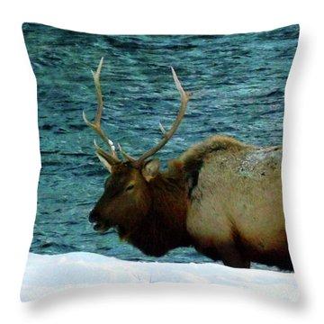 Bull Elk In Winter Throw Pillow