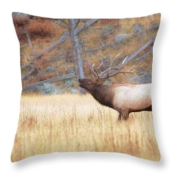 Bull Elk Throw Pillow by Kelly Marquardt