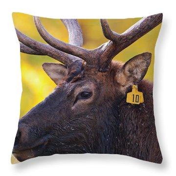 Bull Elk Number 10 Throw Pillow