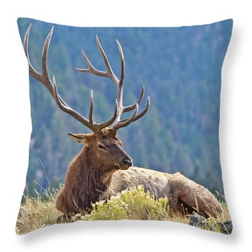 Bull Elk Resting Throw Pillow