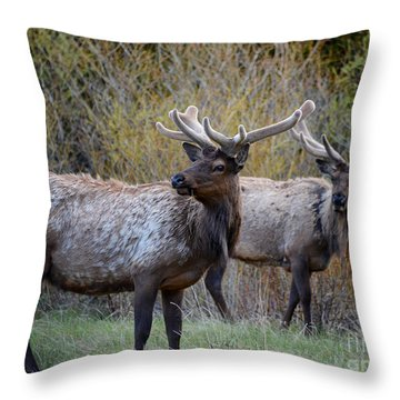 Bull Elk Rocky Mountain National Park Throw Pillow