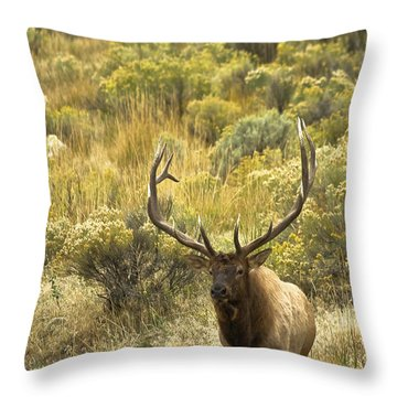Throw Pillow featuring the photograph Bull Elk by Roger Mullenhour
