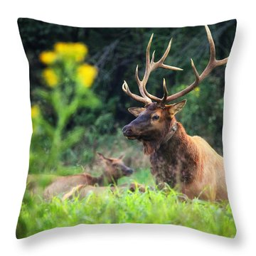 Throw Pillow featuring the photograph Bull Elk Rutting In Boxley Valley by Michael Dougherty