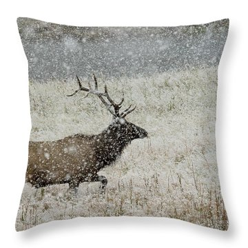 Bull Elk With Snow Throw Pillow