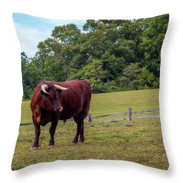 Bull In Field Throw Pillow
