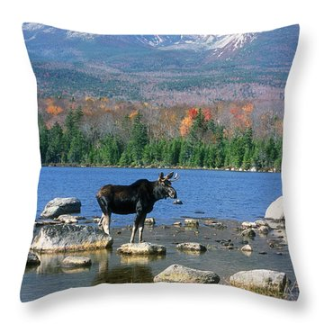 Bull Moose Below Mount Katahdin Throw Pillow by John Burk