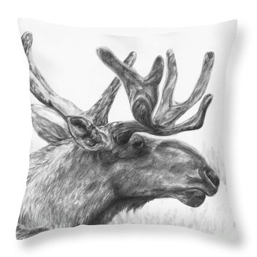 Bull Moose Study Throw Pillow by Meagan  Visser