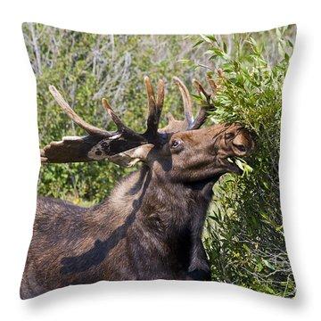 Bull Moose Throw Pillow by Teresa Zieba