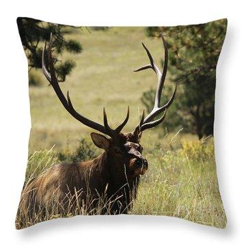 Bullelk1 Throw Pillow