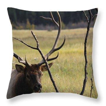 Bullelk2 Throw Pillow
