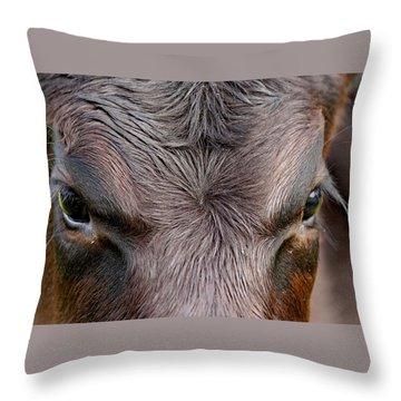 Bull's Eye Throw Pillow