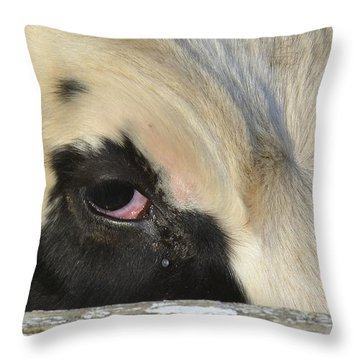 Bull's Eye Throw Pillow