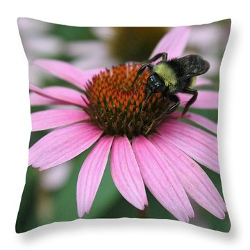 Bumble Bee On Pink Cone Flower Throw Pillow by Sheila Brown
