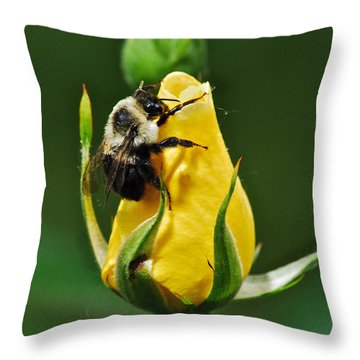 Bumble Bee On Rose  Throw Pillow by Michael Peychich