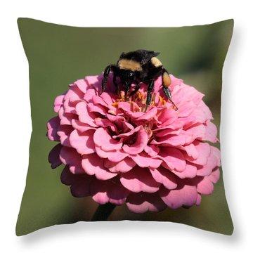 Bumble Bee On Zinnia 2649 Throw Pillow