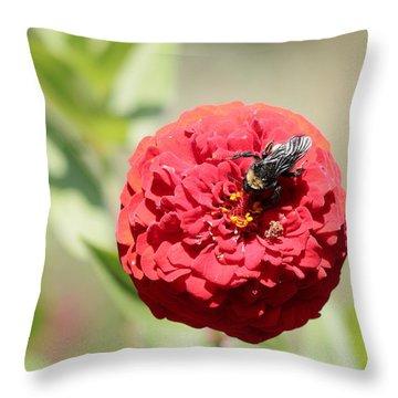 Bumble Bee On Zinnia Throw Pillow