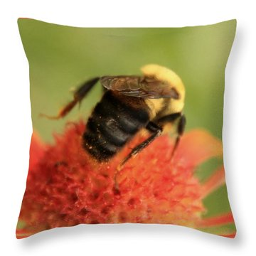 Throw Pillow featuring the photograph Bumblebee by Chris Berry