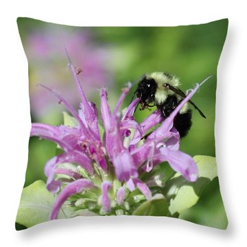 Bumblebee On Bee Balm Throw Pillow