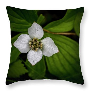Throw Pillow featuring the photograph Bunchberry Dogwood On Gloomy Day by Darcy Michaelchuk