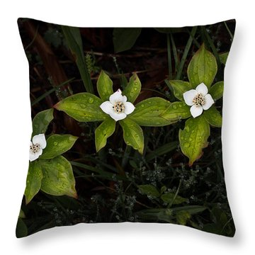 Bunchberry Flowers Throw Pillow