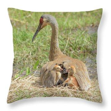 Bunk Mates Throw Pillow by Jim Gray