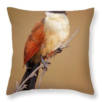 Burchell's Coucal - Rainbird Throw Pillow
