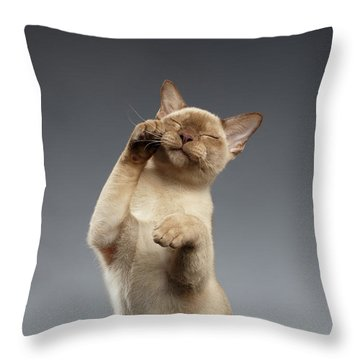 Burma Cat Paws Snout Covers On Gray Throw Pillow