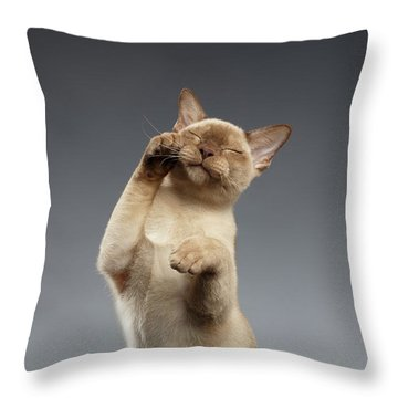 Throw Pillow featuring the photograph  Burma Cat Paws Snout Covers On Gray by Sergey Taran