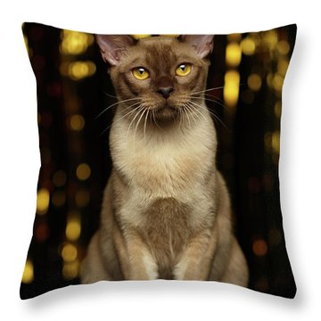Throw Pillow featuring the photograph Burmese Cat Sits On New Year Background by Sergey Taran