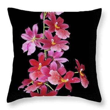 Burrageara Nelly Isler, Swiss Beauty Throw Pillow