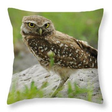 Burrowing Owl By Burrow Mound Throw Pillow