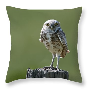 Throw Pillow featuring the photograph Burrowing Owl by Gary Lengyel